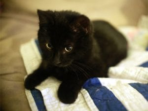 13-things-cats-purring-02-sl
