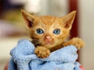 13-things-cats-purring-03-sl