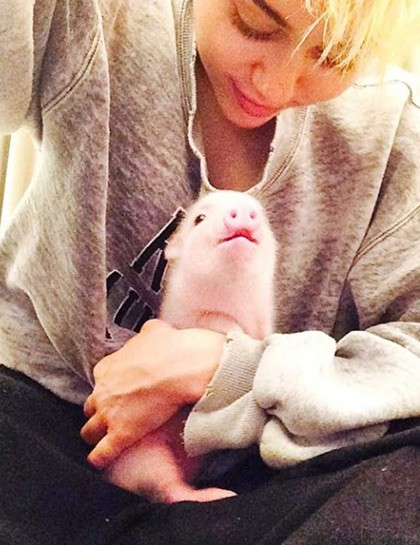 miley-cyrus-bubba-sue-micro-pig-instagram-august-2014__large