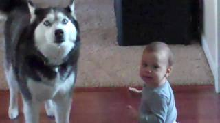Cute baby and a dog singing the same song together