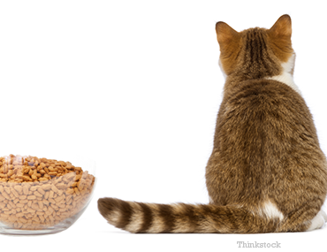your-cat-not-eating-may-lead-fatty-liver-disease-1-450373695-164265332_1